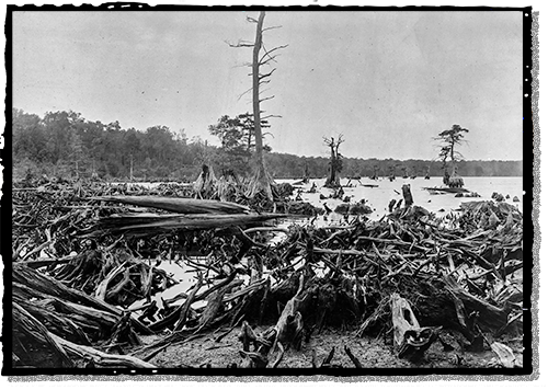 The tangled landscape of the Great Dismal Swamp
