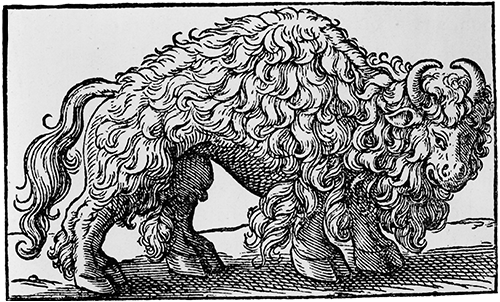 An engraving of a buffalo