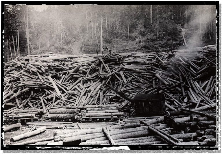 A 1910 logging operation loads harvested trees onto railroad cars.