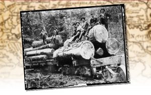 A logging crew in Transylvania County NC